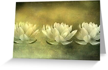 Three Lotus Flowers by Josie Duff