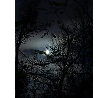Moonlight Trees Photographic Print