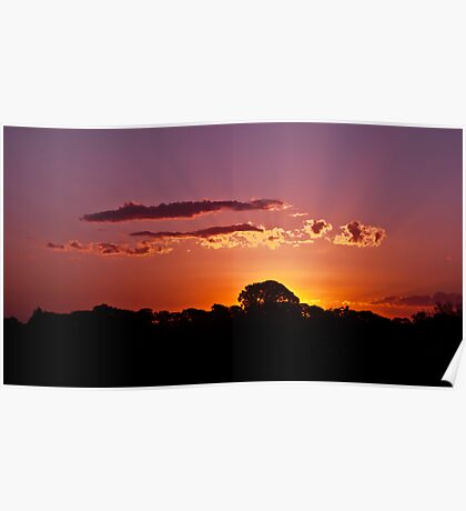 Sunset, behind a tree Poster