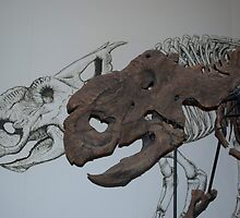 Protoceratops Fossil Skull and Sketch by ArianaMurphy