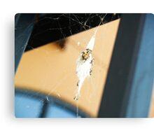 Spider Nest Canvas Print