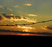 Sunset Under the Barbed Wire by MaryinMaine