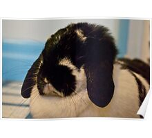 Rorshack, the Lop Eared Rabbit Poster
