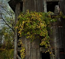 Old Barn Owl  by KFuoco