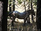 Spotted Horse in the Woods by waddleudo