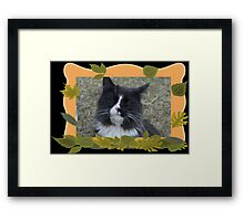 Wind in my fur. Framed Print