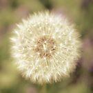 Dandelion by Hilary Walker