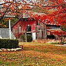 Liv'en In The Ozarks by NatureGreeting Cards ©ccwri