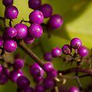 Autumn Berries by Anne McKinnell