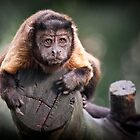 Capuchin Monkey by Michelle Joyce