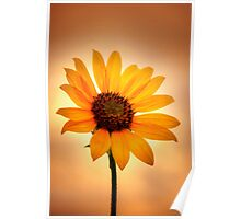 Sunflower v Sunset Poster