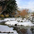 Mayne Island Japanese Garden in snow  by TerrillWelch