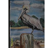 Floridian Pelican on Pappases warf Photographic Print