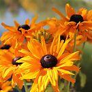Autumn colours by Susan Moss