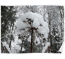 Snow Covered Flower Poster