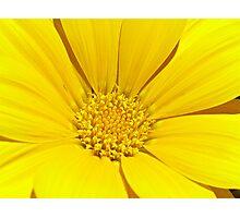 Flower power.... Photographic Print