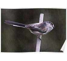 Long Tailed Tit ... Poster