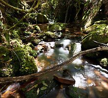 Megalong stream by PeterDamo