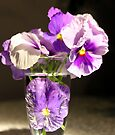 Pansy Purple by Antionette