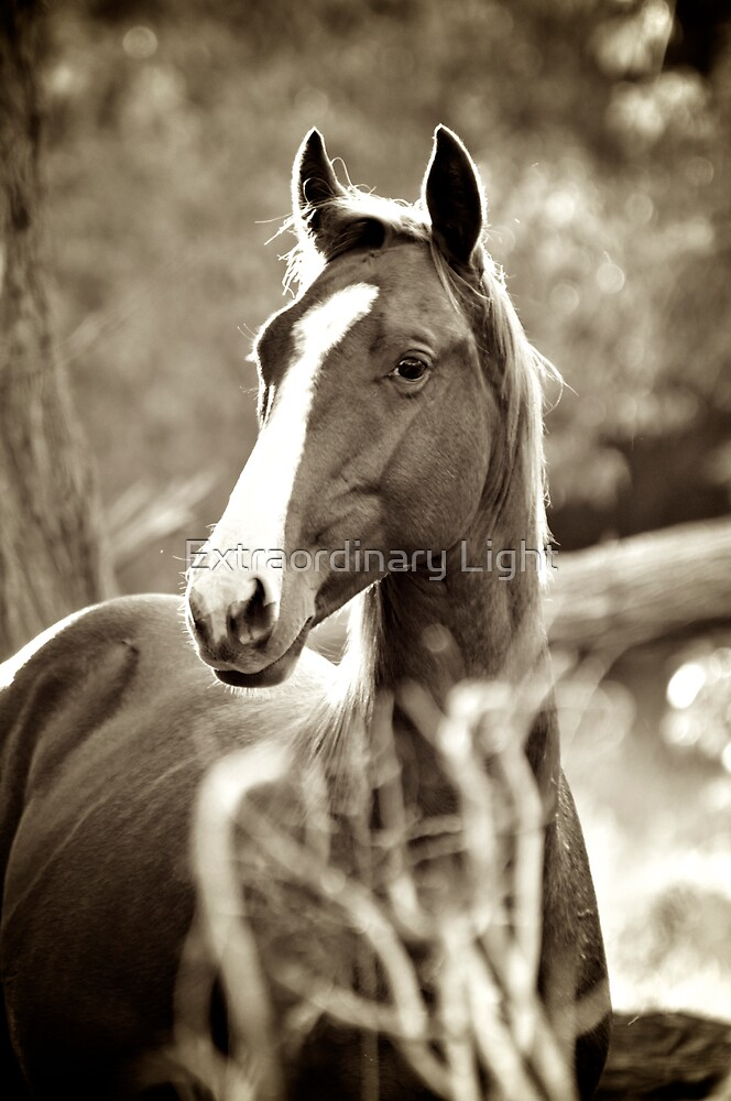 Stallion by Renee Hubbard Fine Art Photography