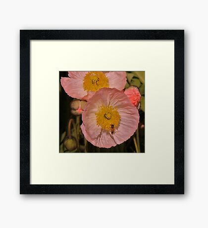 Poppy Pastels! Framed Print