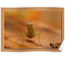baby mantis Poster