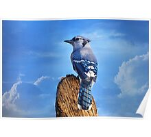 Heavenly Jay Poster