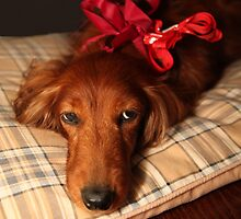 Present dog with red ribbon by Kingsfairy