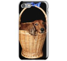 Present dog in a basket with blue ribbon iPhone Case/Skin