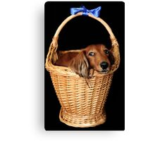 Present dog in a basket with blue ribbon Canvas Print