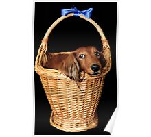 Present dog in a basket with blue ribbon Poster