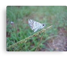Spring Azure butterfly with an ant Metal Print