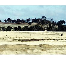 On the Brookton Highway Photographic Print