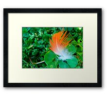 a feathers touch Framed Print