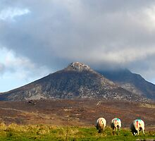 MOURNE MOUNTAINS by PAUL BYRNE