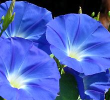 Rhapsody in blue by Maria1606
