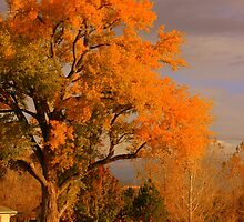 Colorado Country Fall Charm by sgarrityphotogr