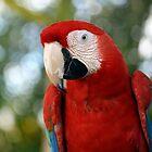 Red Macaw by Juana Maria Garcia Domenech