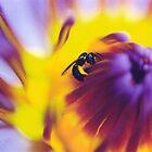 Blue Lotus Bee by WildWheat