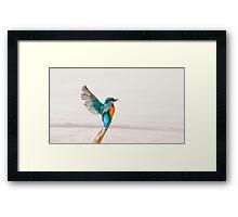Alighting Kingfisher Framed Print