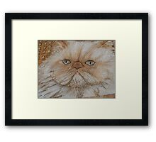 kitty kaboodle Framed Print