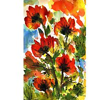 Tuscan Poppies Photographic Print