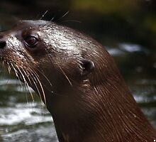 Cool Giant Otter by cute-wildlife