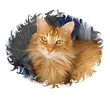 Fuzzy Pumpkin cat Photographic Print