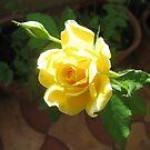 Yellow Blossom by Akash Puthraya