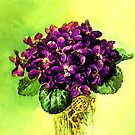 Violets by ©The Creative  Minds