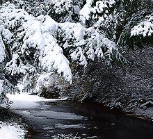 Walk By A Woodland Stream by Jann Ashworth