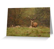 Red Deer Stag at Studley Royal - Ripon Greeting Card