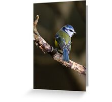 Blue tit, The Rower, County Kilkenny, Ireland Greeting Card