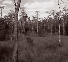 Trees - Big Cypress Preserve by Frank Bibbins